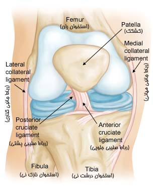 Knee-Anatomy-Collateral-Ligaments